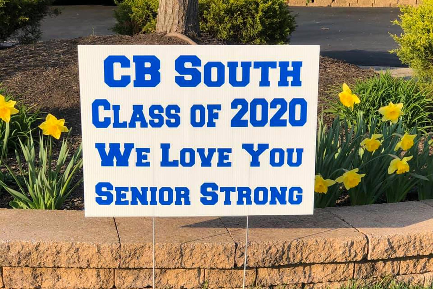 Senior Strong Lawn Signs